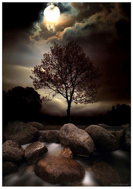 Lone tree in moonlight