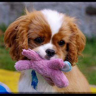 Süßer Hund mit Kuscheltier
