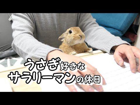 Vlog ウサギ好きなサラリーマンの休日 Youtube ペットの鳥 ウサギ かわいいウサギ