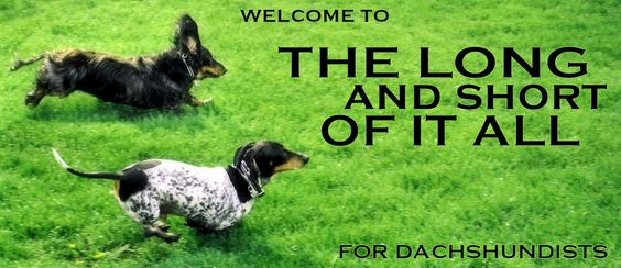 for doxie lovers