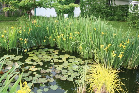 Plant filters work like mad in warm summer months this for Best aquatic plants for small ponds
