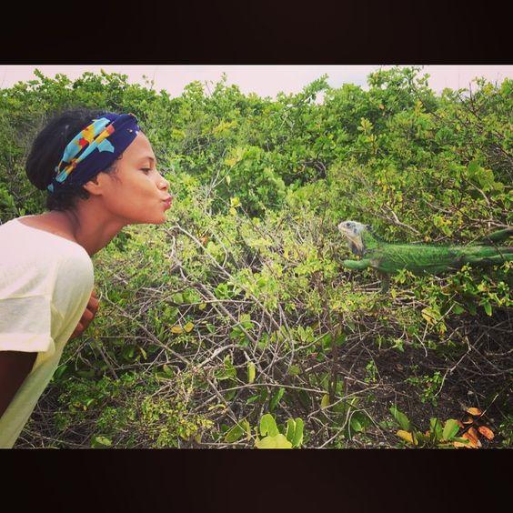 #iguane #tropdeprincecharmant #aprèslescargot #liguane #coeurdartichaud #îleauxiguanes #petiteterre #Guadeloupe #gwada #îleaurequin #îleauxtortues #îleauraies #bref #îlemagique #lemondeestmagique