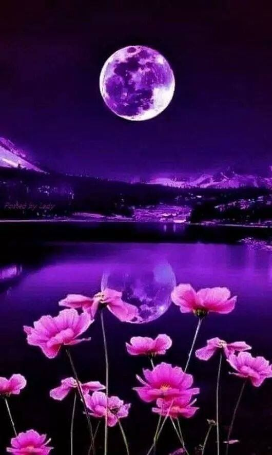 Pin By Telena Falls On Fleurs Nature Photography Beautiful Nature Beautiful Moon Wallpaper hd for mobile kib