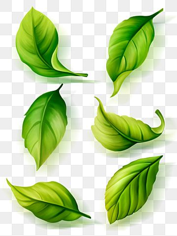 Green Tea Green Leaves Environmental Protection Png Transparent Clipart Image And Psd File For Free Download Leaf Drawing Painted Leaves Leaf Clipart