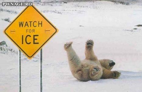 Polar Bear Fail