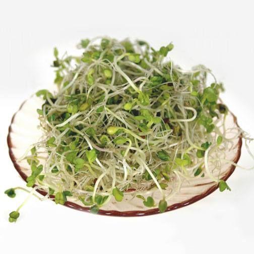 La Alfalfa germinada es desintoxicante, contiene más calcio que la leche, disminuye el colesterol, facilita la digestión y es un eficaz remedio contra el estreñimiento. Si la tomas cruda, por ejemplo en ensalada, es mucho más eficaz.: