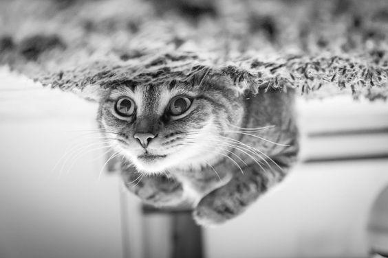 Best Photos of 2013: Cats