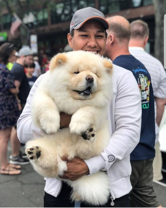 Obesity In Dogs Thicc And Floofy Or A Growing Problem Cute