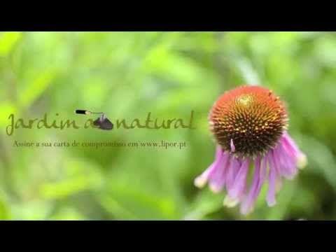 LIPOR | Horta da Formiga - Jardim ao Natural