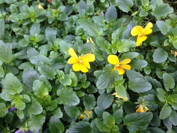 Pretty little yellow flowers