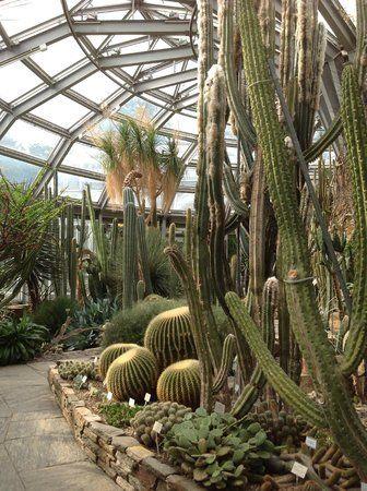 Cactus Garden Bild Von Botanischer Garten Und Botanisches Museum Berlin Dahlem Berlin Botanischer Garten Berlin Botanischer Garten Kakteen Garten