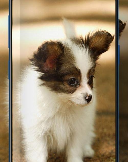 Download Foto Hewan Lucu Dan Imut Wallpaper Anjing Lucu Dan Imut For Android Apk Download Kumpulan Gambar Hewan Peliharaa Hewan Lucu Hewan Gambar Anjing
