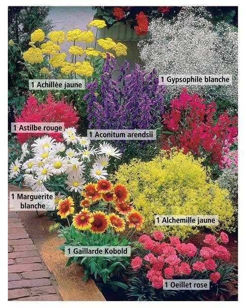 massif de 8 plantes vivaces fleuries