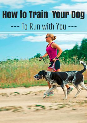 How to Train Your Dog for Running - http://www.active.com/running/articles/how-to-train-your-dog-for-running