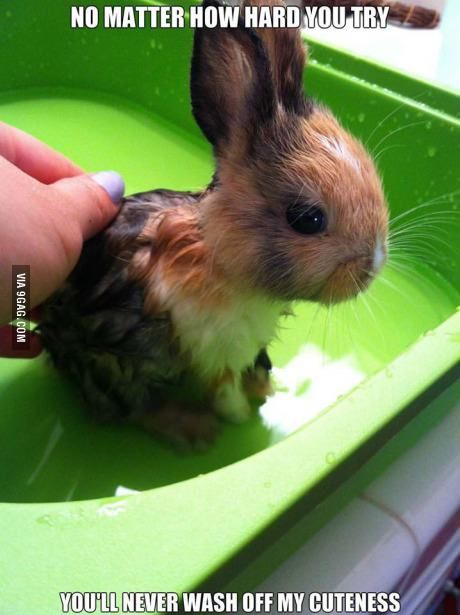 can't wash the cute off.