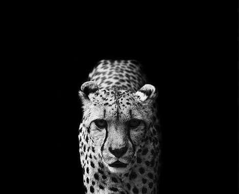 Beautiful dangerous animal portrait