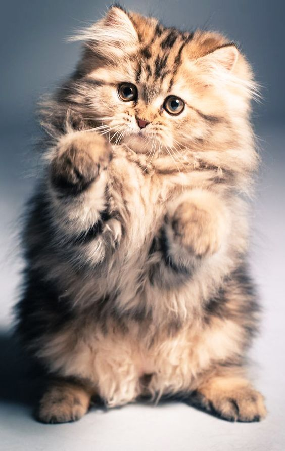 40 Of The Cutest Cat Photos For Your Friday Pets Planet In 2020 Cute Cats Photos Pets Cats Fluffy Kittens