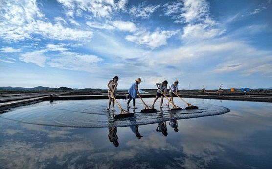 Quá trình làm muối ngay thực sự rất thú vị với nhiều khách du lịch