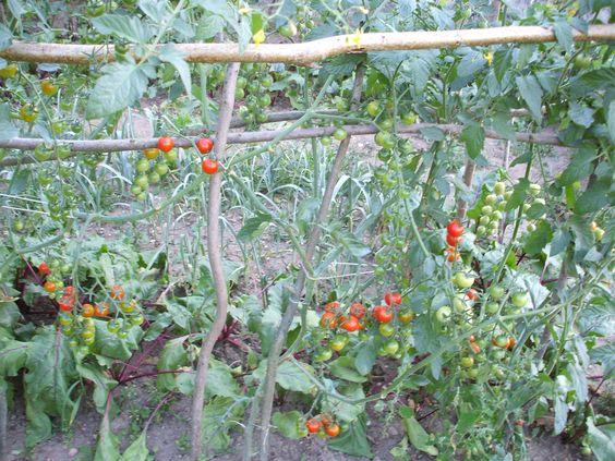 Photo de mon jardin (06 09 13 °