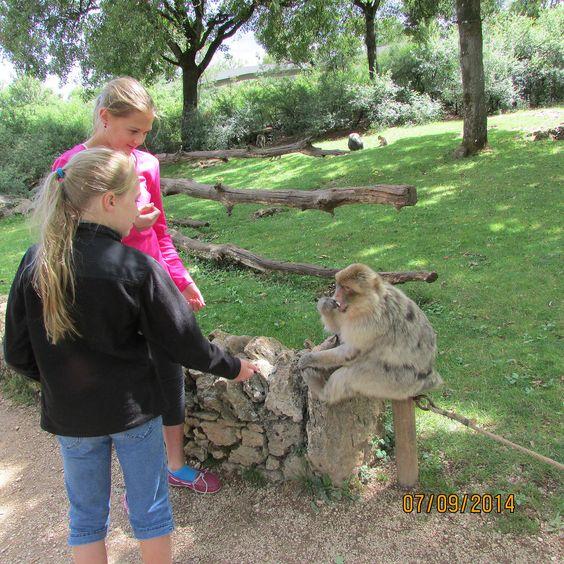 Monkey Forest, Rocamadour, France.jpg