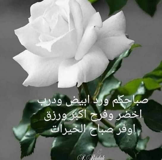 Pin By Gihan Aly On صباح الخير Good Morning Roses Good Morning Arabic Good Morning Greetings
