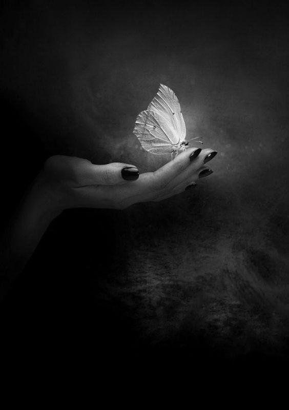 Papillon De Nuit Noir Et Blanc : papillon, blanc, Twitter, Black, White,, White, Photography,, Hands