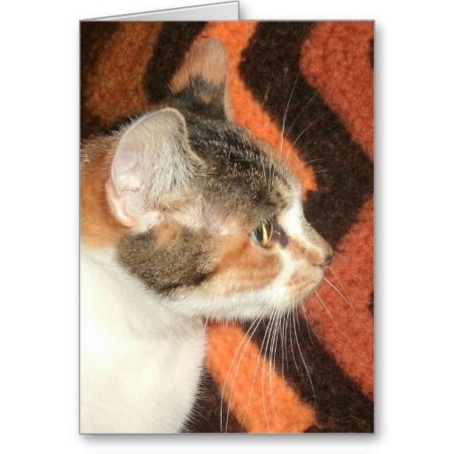 Cat Profile Card! #cute #kitten #zazzle #store #cat #meow #customize #gift #present http://www.zazzle.com/conquestkitty*