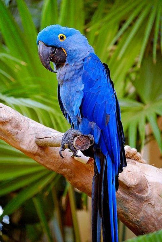 ein Fotos vom blauen Papagei