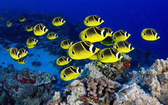 Exotic Tropical Aquarium Fish