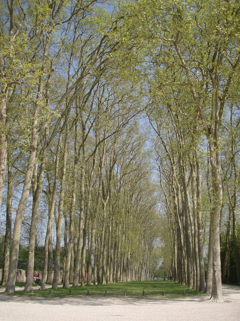 Jardins, Versailles