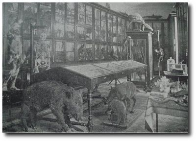 Fotografía del antiguo Real Gabinete que daría lugar al Museo de Ciencias Naturales de Madrid. En sus fondos iniciales cobraban especial importancia las colecciones donadas por indianos que regresaban del Nuevo Mundo con fortuna y con copiosas colecciones