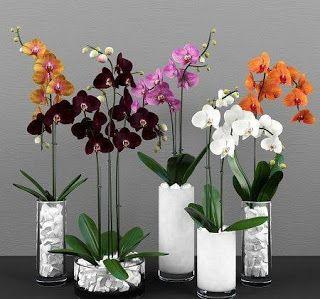 bunga anggrek Orchidaceae memiliki banyak sekali jenis spesies