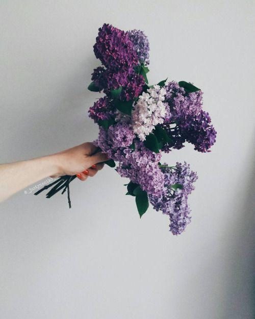 Borrowed Lilacs Purple Flowers Beautiful Flowers Pretty Flowers