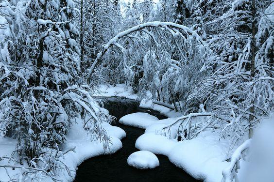 When we took a break during the snow-mobile safari Rovaniemi- Finland [57603840] [OC] #reddit