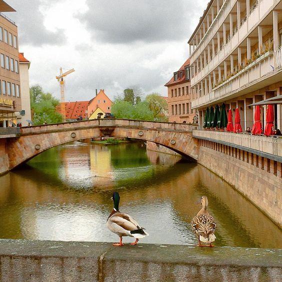 """""""Du Schorsch, des is mir fei heid zu kalt zum badn""""  Selbst unsere #Enten an der #Museumsbrücke sind wenig vom heutigen Wetter begeistert. Aber zum Glück soll es ja in den nächsten Tagen wieder richtig schön werden. Wir wünschen Euch noch einen tollen #Pfingstmontag (rh)  #IgersNürnberg #Fleischbrücke #nürnberg #nuernberg #nordbayern_de #infranken #deinbayern #spiegelung #reflection"""