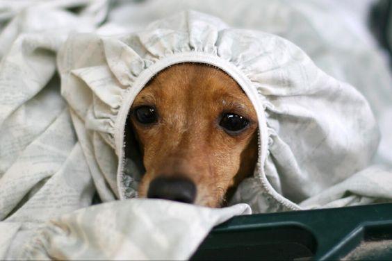 Frankie Still Enjoying Some Toasty Laundry Photo From Joy