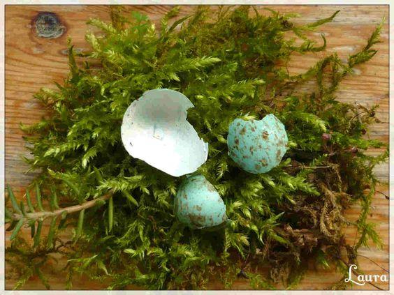 Muschio e uovo di pettirosso