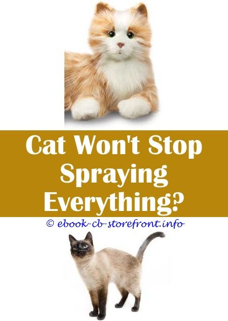 cf0a6546e4ceeded206d692a49cf6586 - How To Get Rid Of Cat Dander On Furniture