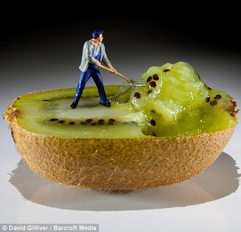 A tiny workman scoops out some kiwi