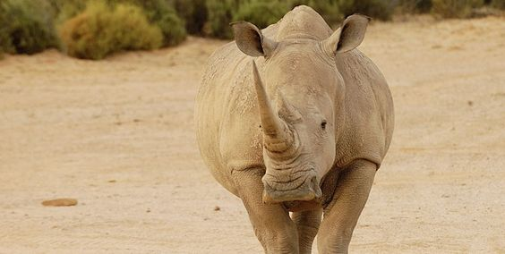The US Government is Protecting Wildlife from Cruelty  Protecting children? Well, that's another story… http://voicesunborn.blogspot.com/2015/04/the-us-government-is-protecting.html