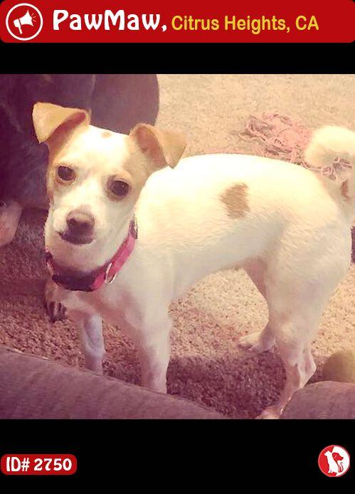 Help Bella Is Lost Losing A Pet Animals Pets