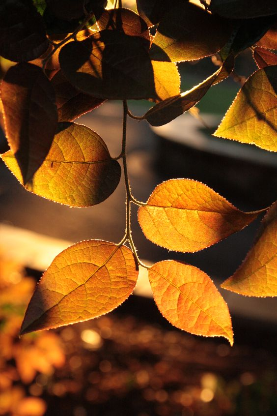 Sunlit leaves #photography #nature