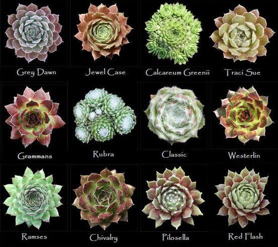 Assorted Types Of Succulents 1 Succulents Tutorials