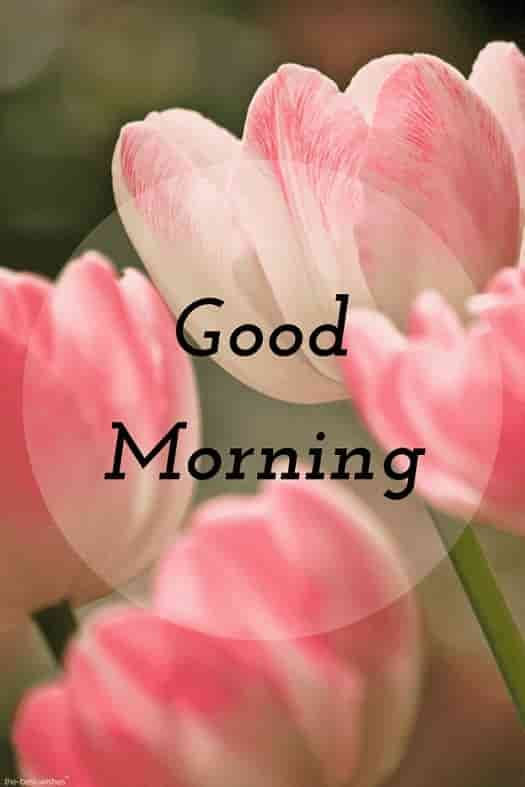 Good Morning Hd Picture