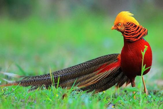 Most Beautiful And Rare Birds In The World