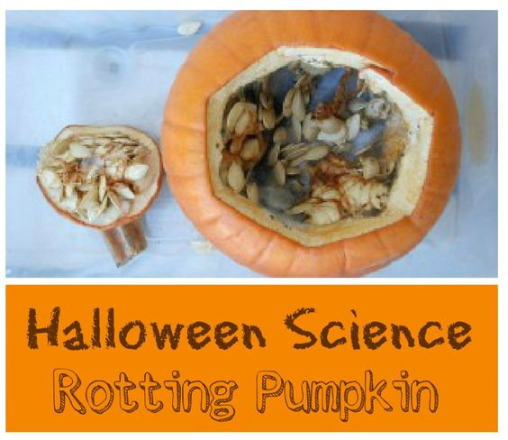 Halloween science... Rotting Pumpkin (gross but fun science for kids)