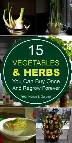 Gardening Goods Store With Gardening Tools Crossword Clue Through Gardening Gloves Ebay By Garde Indoor Vegetable Gardening Regrow Vegetables Indoor Vegetables
