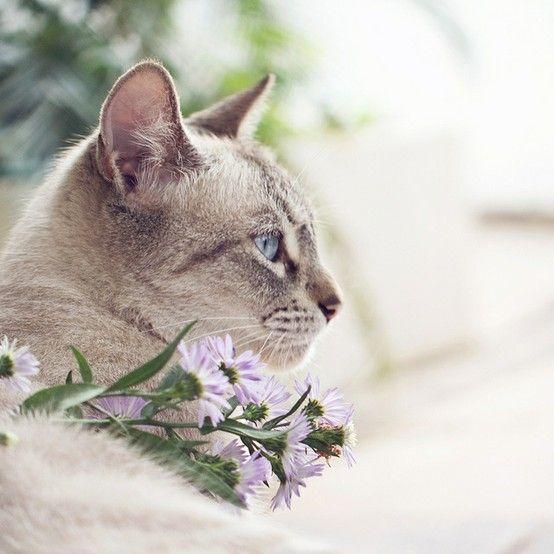 The flower queen.