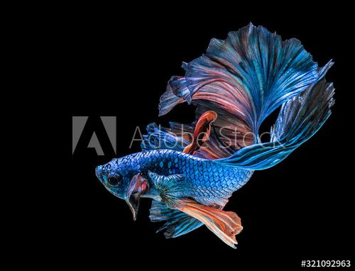 Abstrack Beautiful Of Siam Betta Fish In Thailand Sponsored Siam Beautiful Abstrack Thailand Fish Ad In 2020 Betta Fish Betta Siamese Fighting Fish