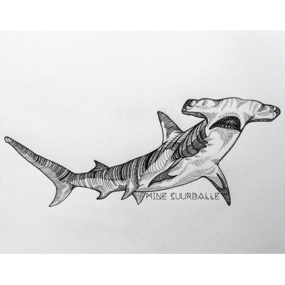 hammerhead wwwgreglowmanartcom instagram greglowman tattoos pinterest hammerhead shark shark drawing and tattoo